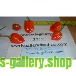Habanero Savina Red Seeds