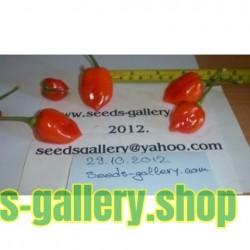 Σπόροι Habanero Savina Red Τσίλι - πιπέρι