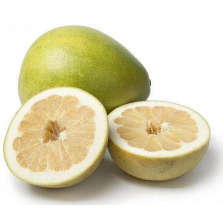 Pomelo Samen (Citrus grandis) Frosthart 1.95 - 4