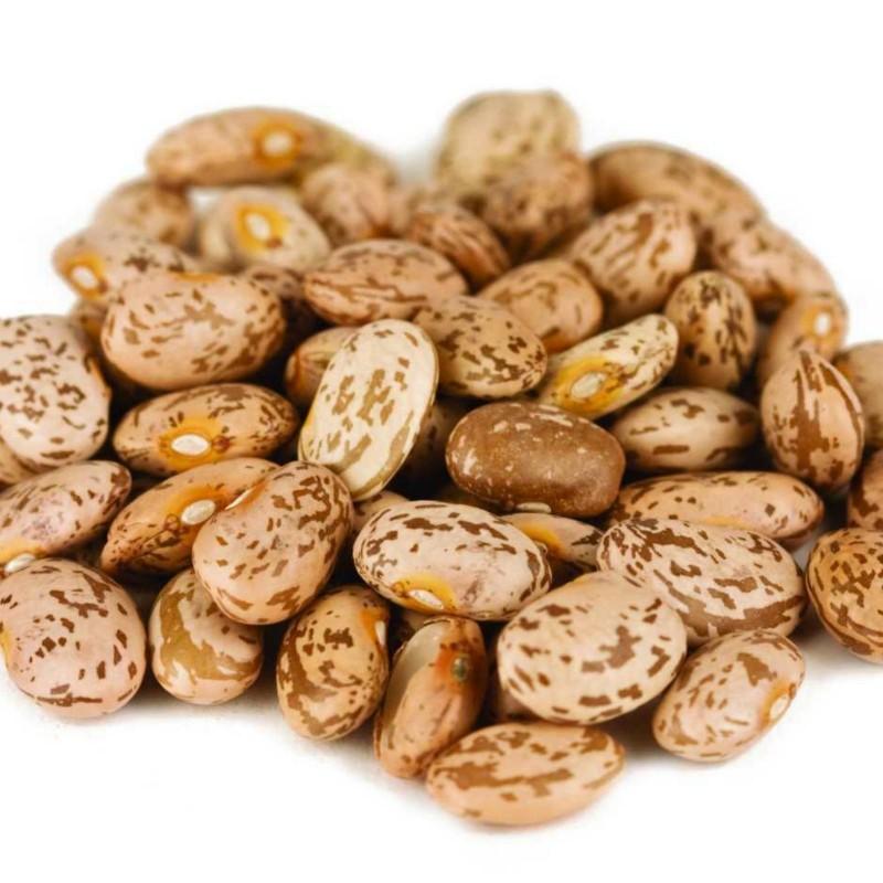 """Pinto"" Bean Seeds (Phaseolus vulgaris) 2 - 3"