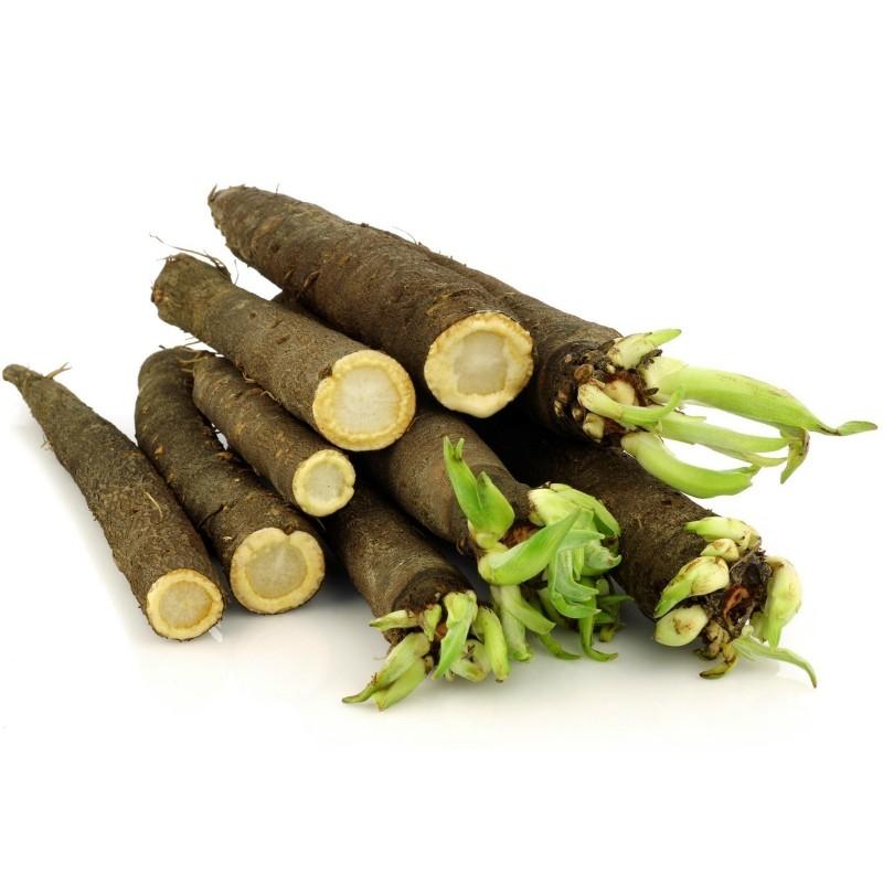 Black Salsify Or Spanish Salsify Seeds 1.95 - 3