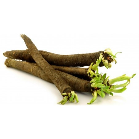 Black Salsify Or Spanish Salsify Seeds 1.95 - 2