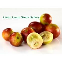 Sementes de Camu Camu...