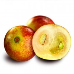 Camu Camu Seeds (Myrciaria dubia) 4.5 - 2