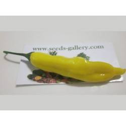 Lemon Drop Chili Samen (Capsicum baccatum) 1.5 - 5