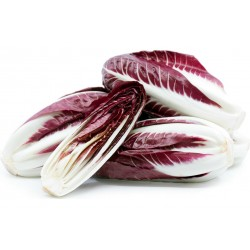 Rossa di Treviso Chicory Seeds 1.85 - 1