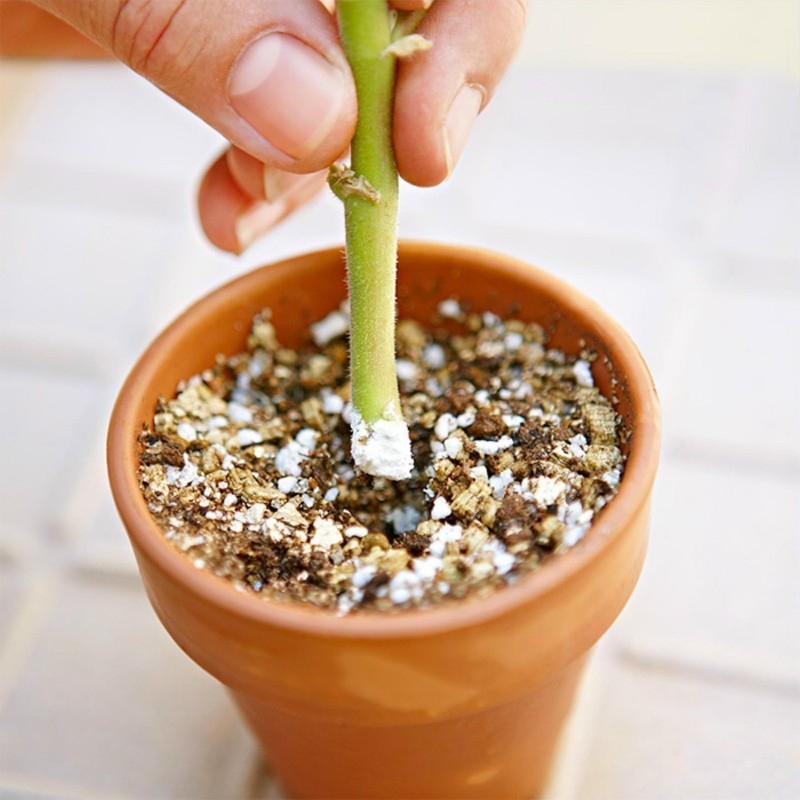 Fast Rooting Hormone Powder, Cuttings Rooting, Seeds Germination 1.65 - 6