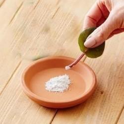 Hormone d'enracinement rapide, les boutures s'enracinant, améliorent la germination des graines 1.65 - 1