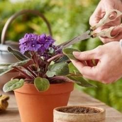 Hormone d'enracinement rapide, les boutures s'enracinant, améliorent la germination des graines 1.65 - 2