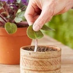 Hormone d'enracinement rapide, les boutures s'enracinant, améliorent la germination des graines 1.65 - 3