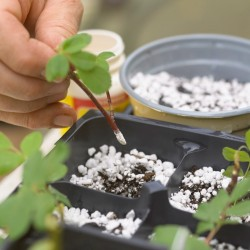 Fast Rooting Hormone Powder, Cuttings Rooting, Seeds Germination 1.65 - 5