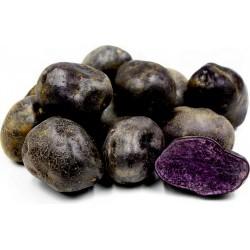 Graines de pommes de terre violettes péruviennes 3.05 - 6