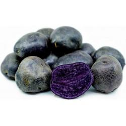 Graines de pommes de terre violettes péruviennes 3.05 - 3