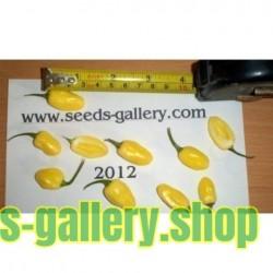 Habanero IVORY Seeds