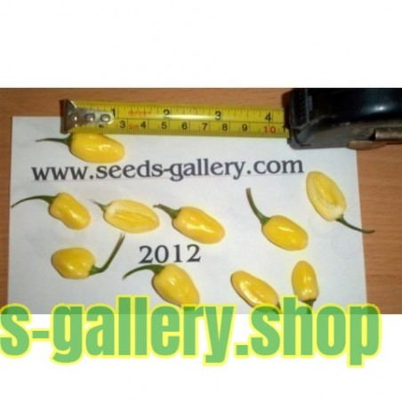 Σπόροι Τσίλι - πιπέρι Habanero Ivory - Ελεφαντοστού