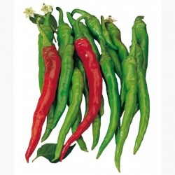 Söt Chili frö SIGARETTA