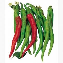 Σπόροι Γλυκό τσίλι πιπεριά SIGARETTA 1.45 - 3