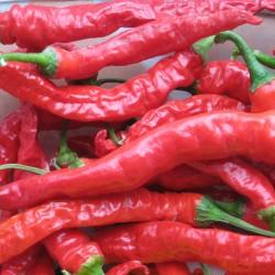 Sementes de pimentão doce SIGARETTA 1.45 - 1
