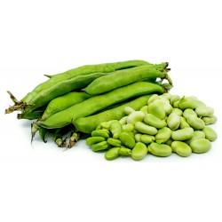 Sementes de Fava, Favinha (Vicia Faba) 2.55 - 6