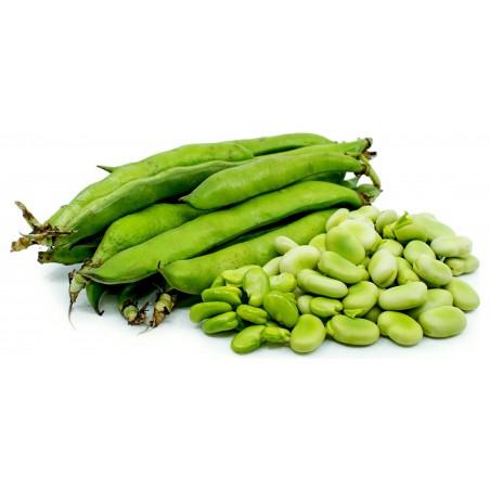 Graines de Fava (Vicia faba) 2.55 - 6