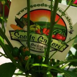 West Virginia Pea Hot Pepper Seeds 1.55 - 3