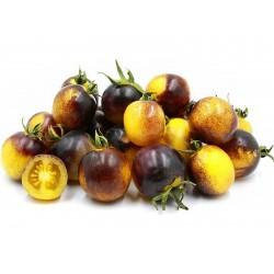 Semi di pomodoro giallo blu...