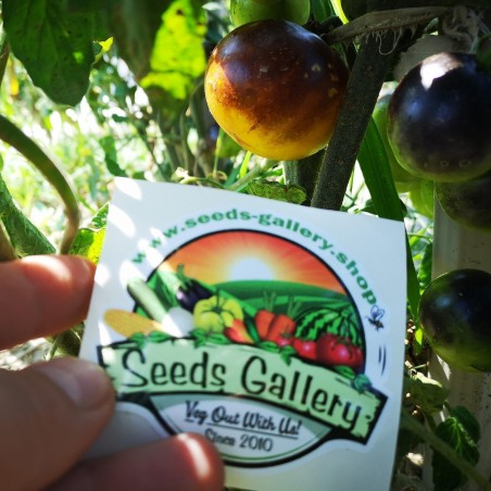 Wagner Blue Yellow Tomato Seeds 2.25 - 2