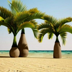 Bottle Palm Seeds (Hyophorbe lagenicaulis) 4.95 - 1