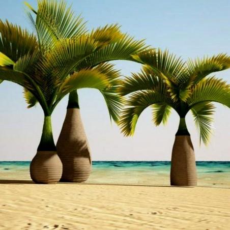Sementes de Palmeira Garrafa (Hyophorbe lagenicaulis) 4.95 - 1