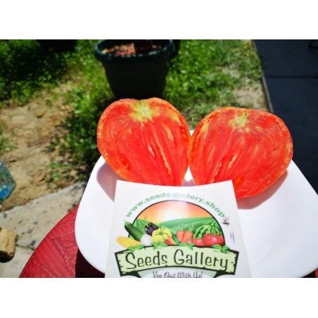 Graines de Tomate Coeur de Boeuf 1.75 - 3