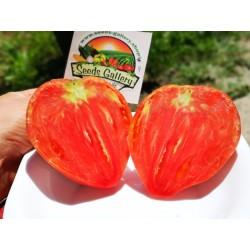 Semillas de tomate Oxheart 1.75 - 4