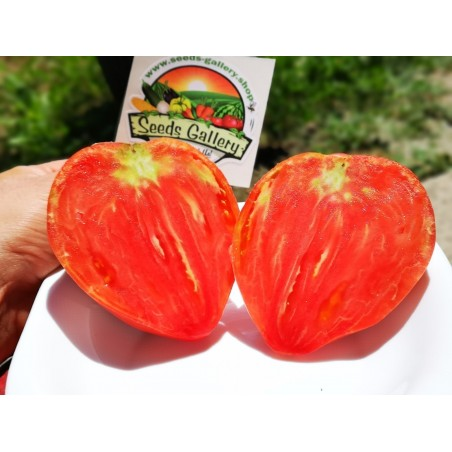 """Sementes de Tomato """"Coração de Boi"""" 1.75 - 4"""