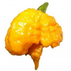 Graines de Piment Carolina Reaper rouge et jaune 2.45 - 8
