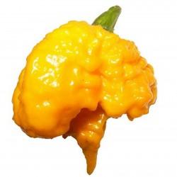 Semi di Peperoncino Carolina Reaper rosso e giallo 2.45 - 8