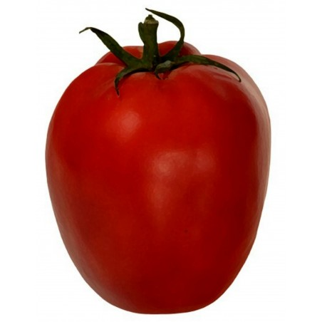 Tomatensamen Alparac - Sorte aus Serbien.