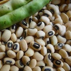 Graines de Haricots Cornilles (Vigna unguiculata) 2.5 - 2