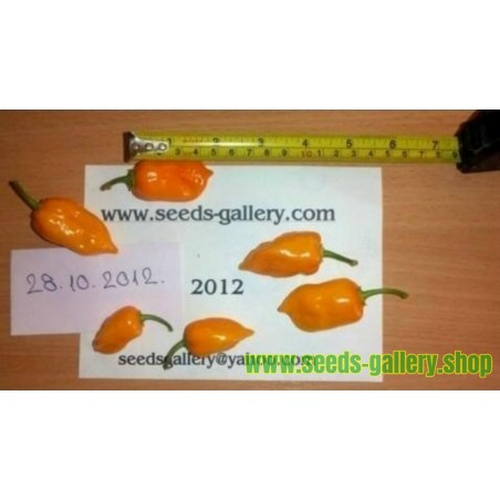 Graines de Piments Habanero Orange - Rouge