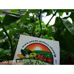 Sementes da Pimenta Carolina Reaper vermelho e amarelo 2.45 - 15
