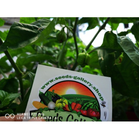 Carolina Reaper Seeds Red or Yellow Worlds Hottest 2.45 - 15