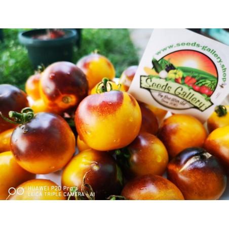 Wagner Plavo žuti paradajz seme 2.25 - 4