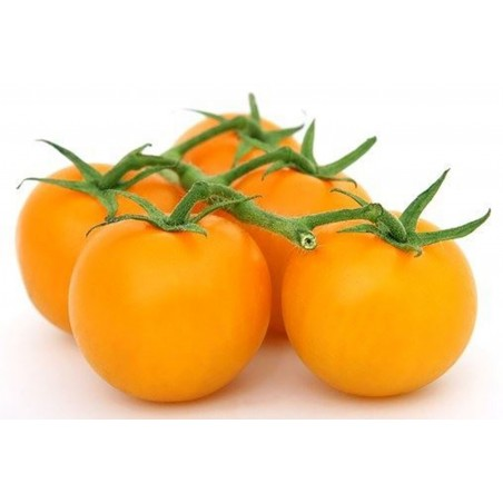 Gold Nugget Tomato Yellow Cherry Seeds