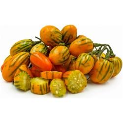 STRIPED TOGA Σπόροι μελιτζάνας 2.25 - 4