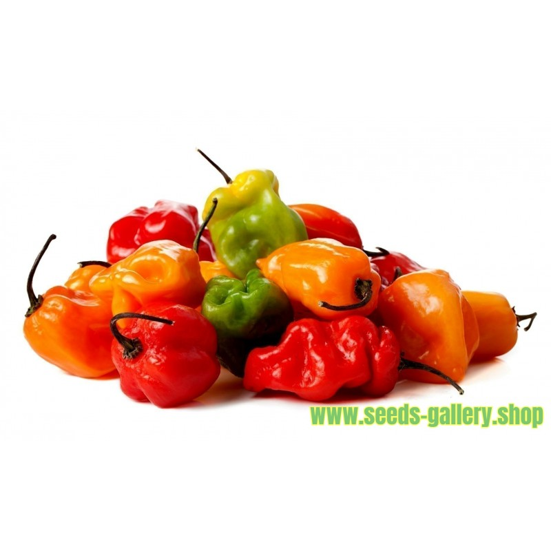 Sementes de Habanero Laranja - Vermelho