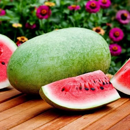 Wassermelone Samen Charleston Gray 1.95 - 2