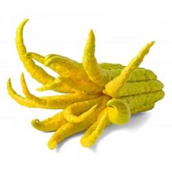 Fingercitron Frön (Citrus medica var. sarcodactylis) 0 - 1