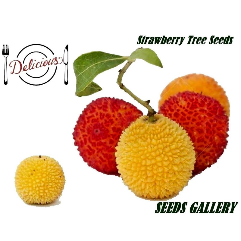 Strawberry Tree Seeds (Arbutus Unedo) 1.75 - 1