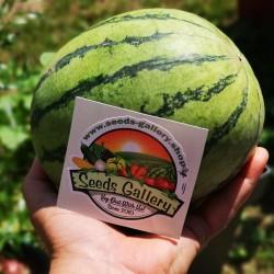 Mini vattenmelonsfrön Sugar Baby 2.25 - 2