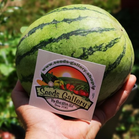 Mini Wassermelone Sugar Baby Samen 2.25 - 2