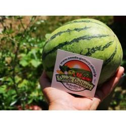 Mini Wassermelone Sugar Baby Samen 2.25 - 4
