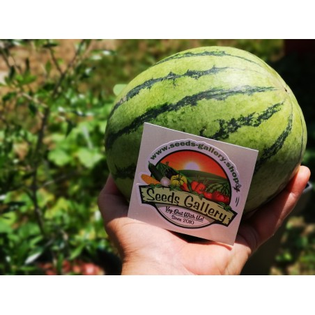 Mini Watermelon Sugar Baby Seeds 2.25 - 4